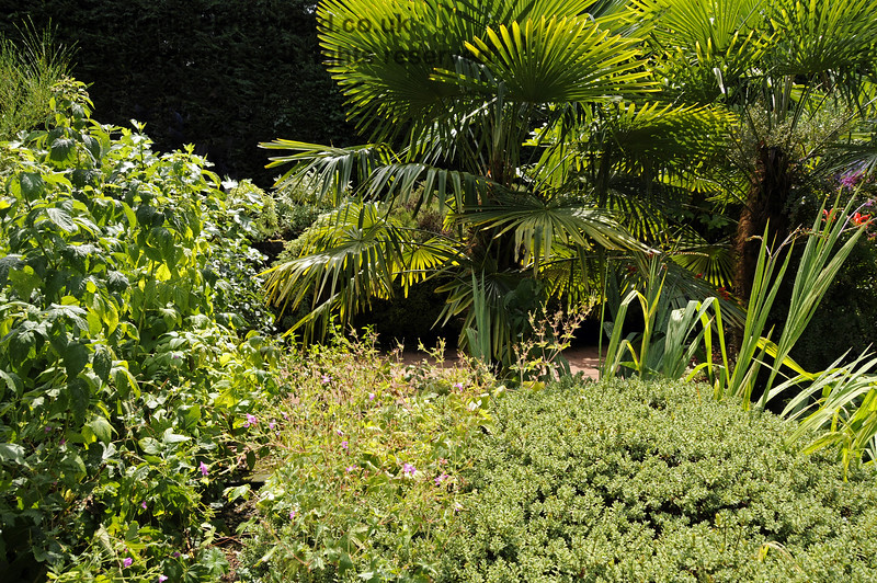 More of the lovely landscaped garden at Newick & Chailey. 28.07.2014 11339