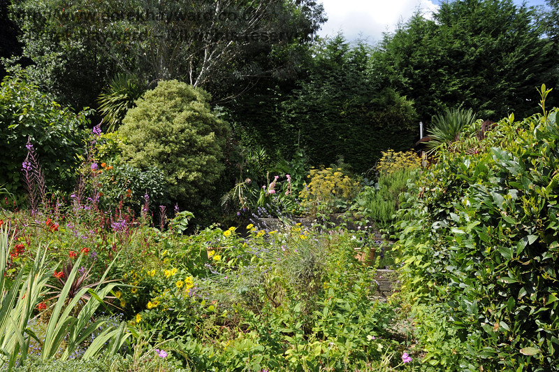 More of the lovely landscaped garden at Newick & Chailey. 28.07.2014 11370