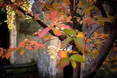 Autumn in Grange Gardens
