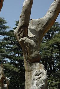 Rzezby przemyslnie wplecione w olbrzymie martwe drzewo