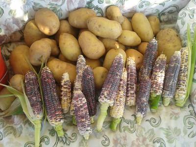 LV Vegetable Gardening
