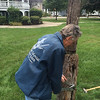Richard MacKay tightens the bolts to secure the newly-maintained liberty pole in Billerica's Common. Photo by Mary Leach