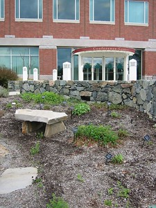 Medicinal herb garden at MMS.  MMS has a lovely garden website and an illustrated list of plants.
