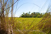 9312 beautiful prairie and a hardwood hammock at the northern tip of the Everglades in the Ten Thousand Islands