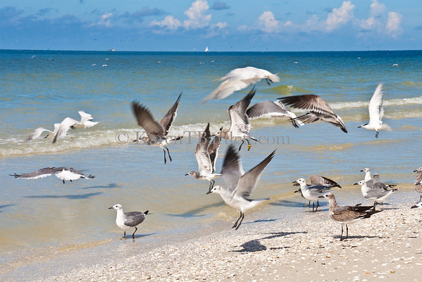 2406 Sea gulls