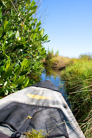 9333 Kayaks maneuver the narrow cuts in the River of Grass in the Everglades. Mangroves and cordgrass will give way to open lakes and mangrove tunnels.
