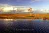 s64 Serene prairie in the Everglades