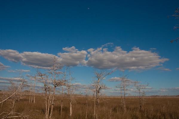 8933 Prairie off Loop Road trail. Grass is green through early November; goes brown in dry season.