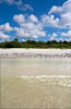 2449 Blue skies, white clouds, mangroves, seagulls clear waters and a deserted beach in the Ten Thousand Islands
