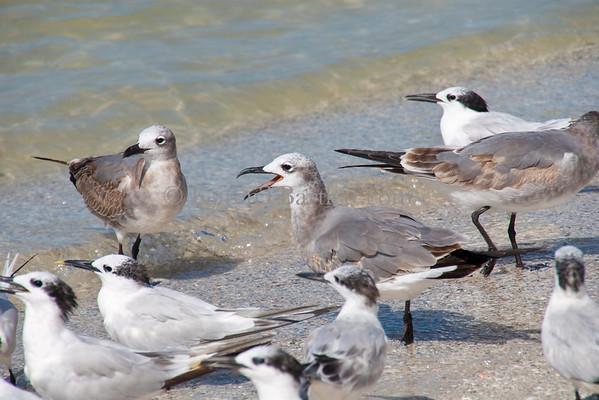 2471 Gulls at shoreline