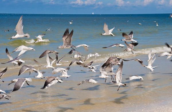 2411 sea gulls in flight