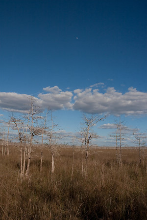 8931 Prairie in winter. Prairie grass is green in rainy season June-September, golden brown in dry season.