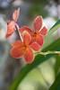 6947 Orchid