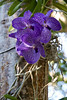 6945 Orchid