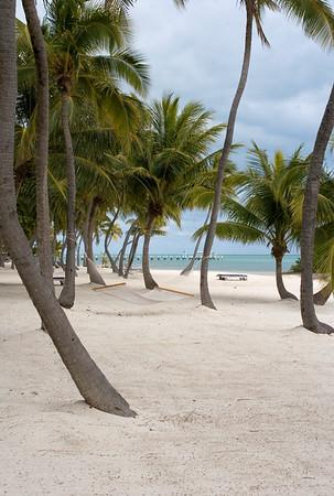 IMG_7030 Coconut Palms, Moorings Village Resort , Islamorada