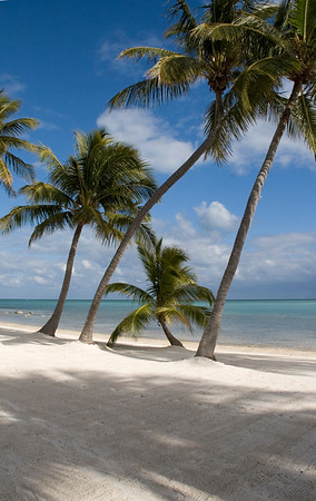 7108 Coconut palms on sandy beach, turquoise waters