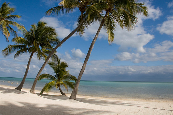 7104 Coconut Palms on white sand beach, Florida Keys