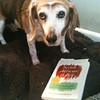 "Beaglett (""Beagie"") enjoying 'Scout, Atticus, and Boo : a celebration of fifty years of To kill a mockingbird' by Mary M. Murphy. From Jonathan Geisel via email."