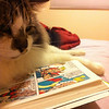 """This is my cat Reggie, reading Mark Gruenwald's 'Squadron Supreme'."" From Gary L. via email."