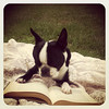 """This is Boston reading her favorite book, 'To Kill A Mockingbird' by Harper Lee."" Michelle Q. via Facebook."