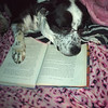 """Dixie reading Harry Potter and the Prisoner of Azkaban by J.K Rowling... with her eyes closed :) my dog is so talented."" Courtney G. via Facebook."