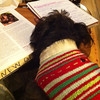"""Bella studying an Anatomy and Physiology textbook."" from Charlotte L. via email."