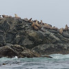 Tour of Broken Islands Group by Archipeligo Tours in Ucluelet.