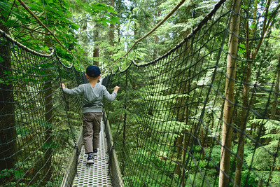 Canopy walk at the UBC Botanical Gardens.
