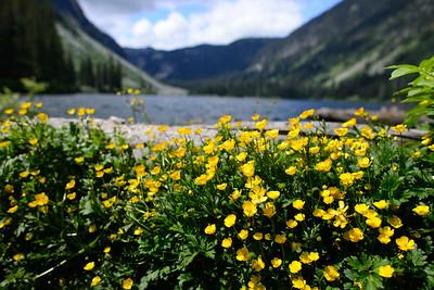 Flowers at Falls Lake, Coquihalla Summit.