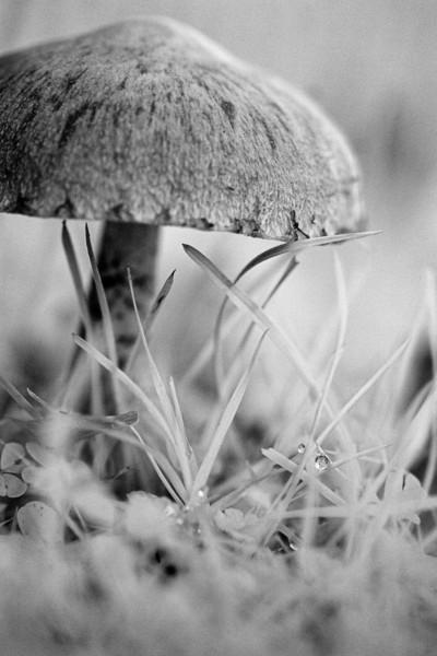 Unwanted Mushroom