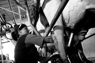 milkshed.11.11-3144