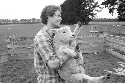 sheep.lincoln11-1391