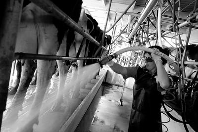 milkshed.11.11-3169