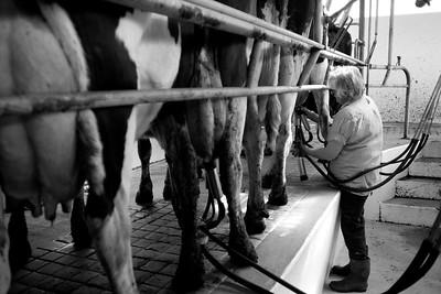 milkshed.11.11-3131