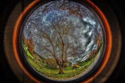 Looking out from my hobbit hole