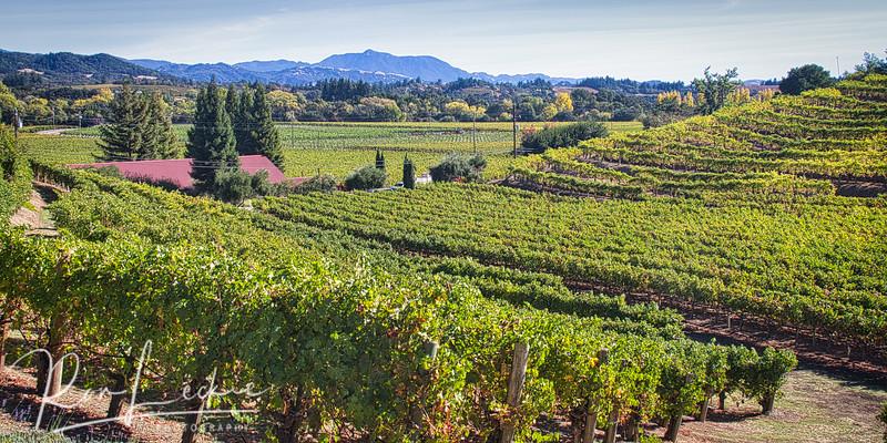 Rafanelli Winery - Dry Creek Valley