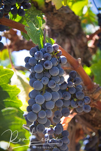 On The Vine - Justin Winery