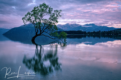 """That Tree"" at Lake Wanaka, New Zealand - sunrise looking north-east"