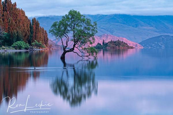 """That Tree"" at Lake Wanaka, New Zealand - sunrise"
