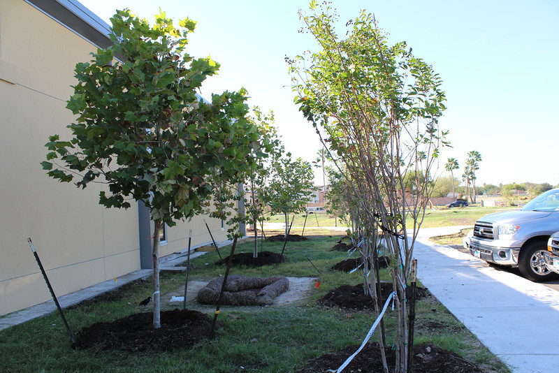 Trees on west side of building, where library staff will park. Walkway leads directly to Dewey Learning Trail on south side of building.