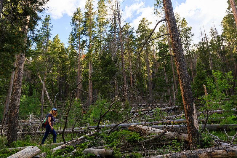 Nadav Soroker<br /> <br /> A hike up to Brown's Landing Trail in Medicine Bow-Routt National Forest on Friday, June 14, 2019.