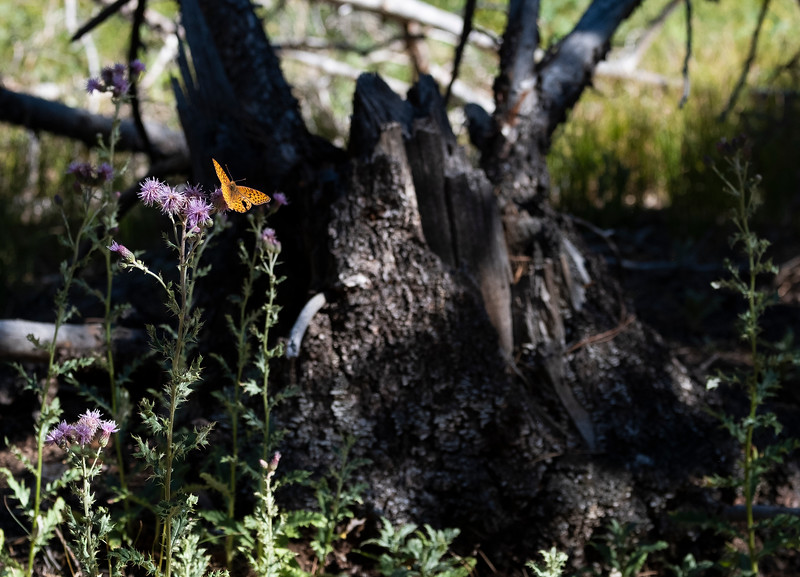 Nadav Soroker<br /> <br /> Scouting landscape locations in Medicine Bow National Forest, on Friday, August 9, 2019.