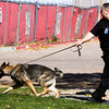 Amp pulls Corporal Matt Sanchez while practicing a search outside the Dean Fleischauer gymnasium at Fountain Middle School in Fountain, Colo. on Tuesday, Oct. 10, 2017. Sanchez doesn't stop Amp from pulling since she is trained for search and rescue.<br /> <br /> (The Gazette, Nadav Soroker)