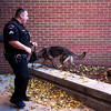 Amp sniffs around the outside of the Dean Fleischauer Center at Fountain Middle School in Fountain, Colo. on Tuesday, Oct. 10, 2017. Amp does an external perimeter search every day to make sure no one is hiding things on the grounds.<br /> <br /> (The Gazette, Nadav Soroker)