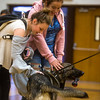 """Alyssa McEwen and Haylee Hicks, students at Fountain Middle School, pet Amp after gym in Fountain, Colo. Photographed on Tuesday, Oct. 10, 2017. Amp is trained for searches, not apprehension, so she is good with kids. """"Her training is find and play, not find and bite,"""" Sanchez said.<br /> <br /> (The Gazette, Nadav Soroker)"""