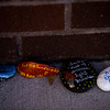 """Rocks with messages line the walls outside of Crunch Fitness in Colorado Springs, Colo. on Sunday, Oct. 15, 2017. The messages or images painted on the rocks were for Chris Roybal, general manager at the gym and victim of the Las Vegas shooting. """"Instead of flowers people have been bringing rocks."""" Ginger Coleman, a gym employee, said. """"Every day when I come to work there's more.""""<br /> <br /> <br /> (The Gazette, Nadav Soroker)"""