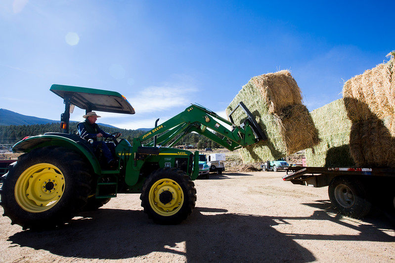 Glenn Ryan pulls hay of a truck at AG Ranch in Bailey, Colo. on Tuesday, Oct. 24, 2017. <br /> <br /> <br /> (The Gazette, Nadav Soroker)