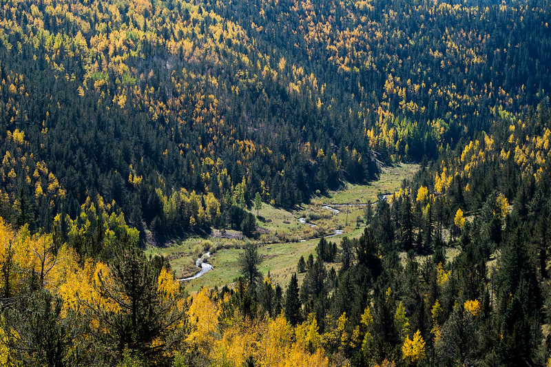 A river runs through an aspen dotted valley in Pike National Forest on Tuesday, Sept. 26, 2017. <br /> <br /> (The Gazette, Nadav Soroker)