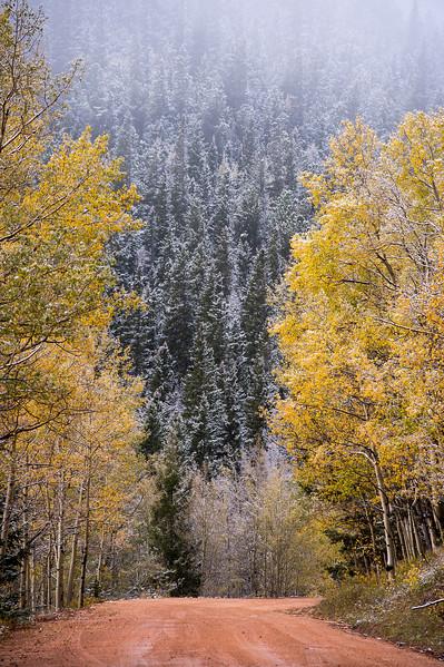 Frosted aspens line Gold Camp Road in Pike National Forest on Tuesday, Sept. 26, 2017. <br /> <br /> (The Gazette, Nadav Soroker)