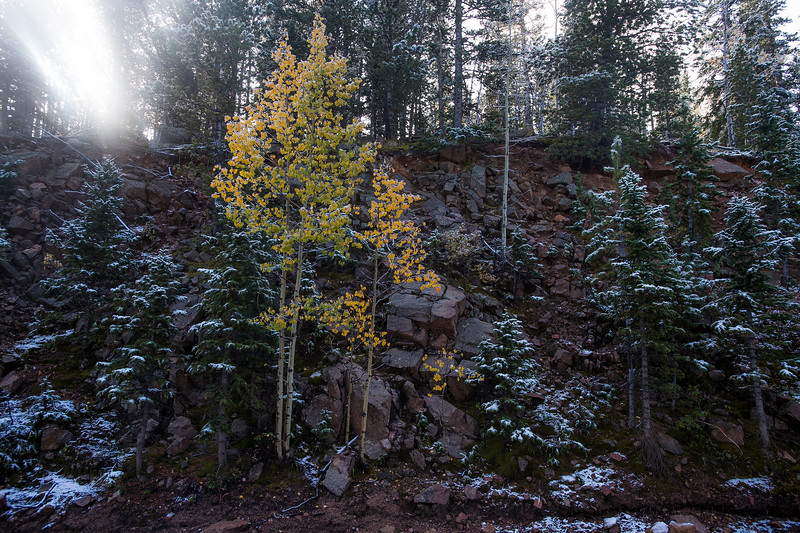 Sunlight breaks through the trees near a turning aspen along Gold Camp Road on Tuesday, Sept. 26, 2017. <br /> <br /> (The Gazette, Nadav Soroker)